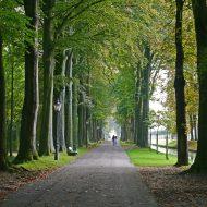 Schlosspark Nordkirchen mit Baumallee