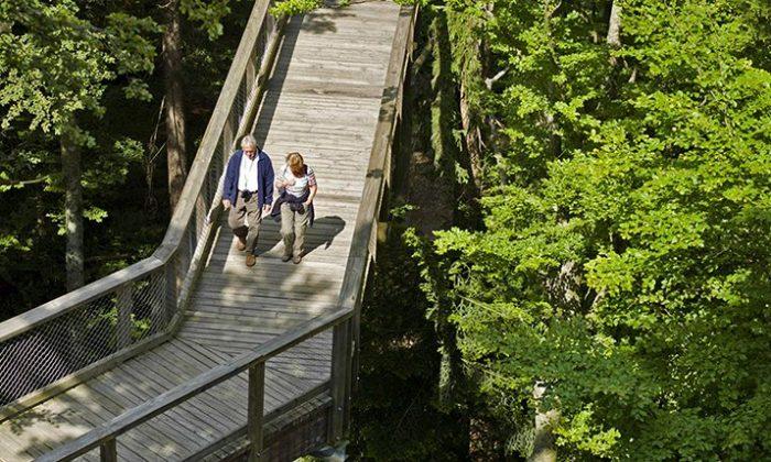 Älteres Paar spaziert über den Baumwipfelpfad