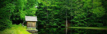 See im dicht zugewachsenden Wald