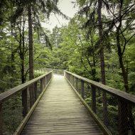 Pfad aus Holz mitten durch den Wald