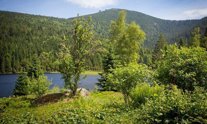 Berg Großer Arber und Wälder