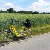 Gelbes Fahrrad neben Feld