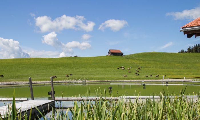 Grüne Wiese neben dem 2.500 m² Naturbadesee