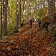 Zwei Menschen betreiben Nordic Walking im Wald