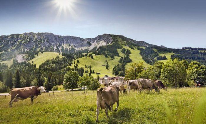 Menschen wandern in den Alpen