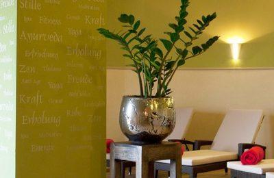 Pflanze im Ruheraum