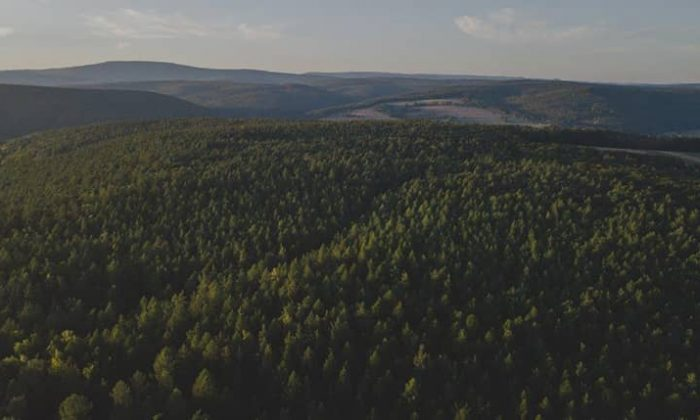 Landschaftsaufnahme vom Wald in der Rhön