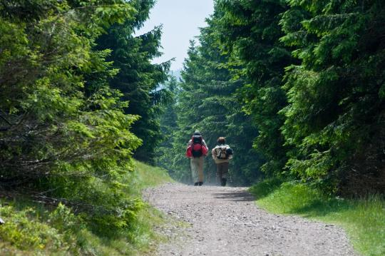 Paar wandert durch einen Wald