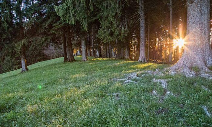Wiese und Bäume im Wald bei Sonnenuntergang